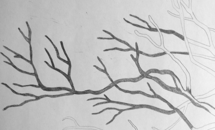 Drawing Seaweed Trees
